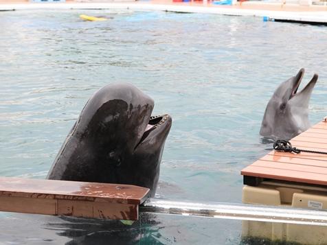 5コビレゴンドウ(クジラ).jpg