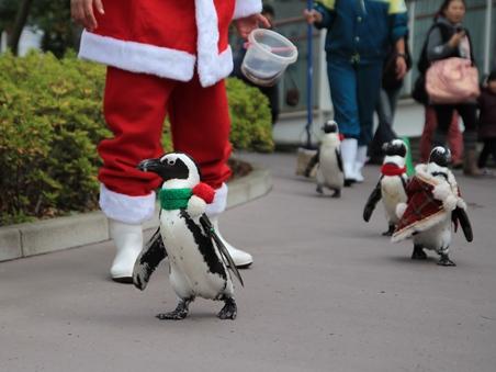 1ペンギンパレード.jpg